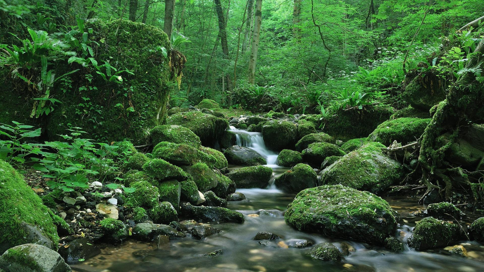 Desmatamento: Impactos negativos na qualidade da água