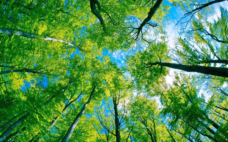 Pode a tecnologia resolver os problemas ambientais?