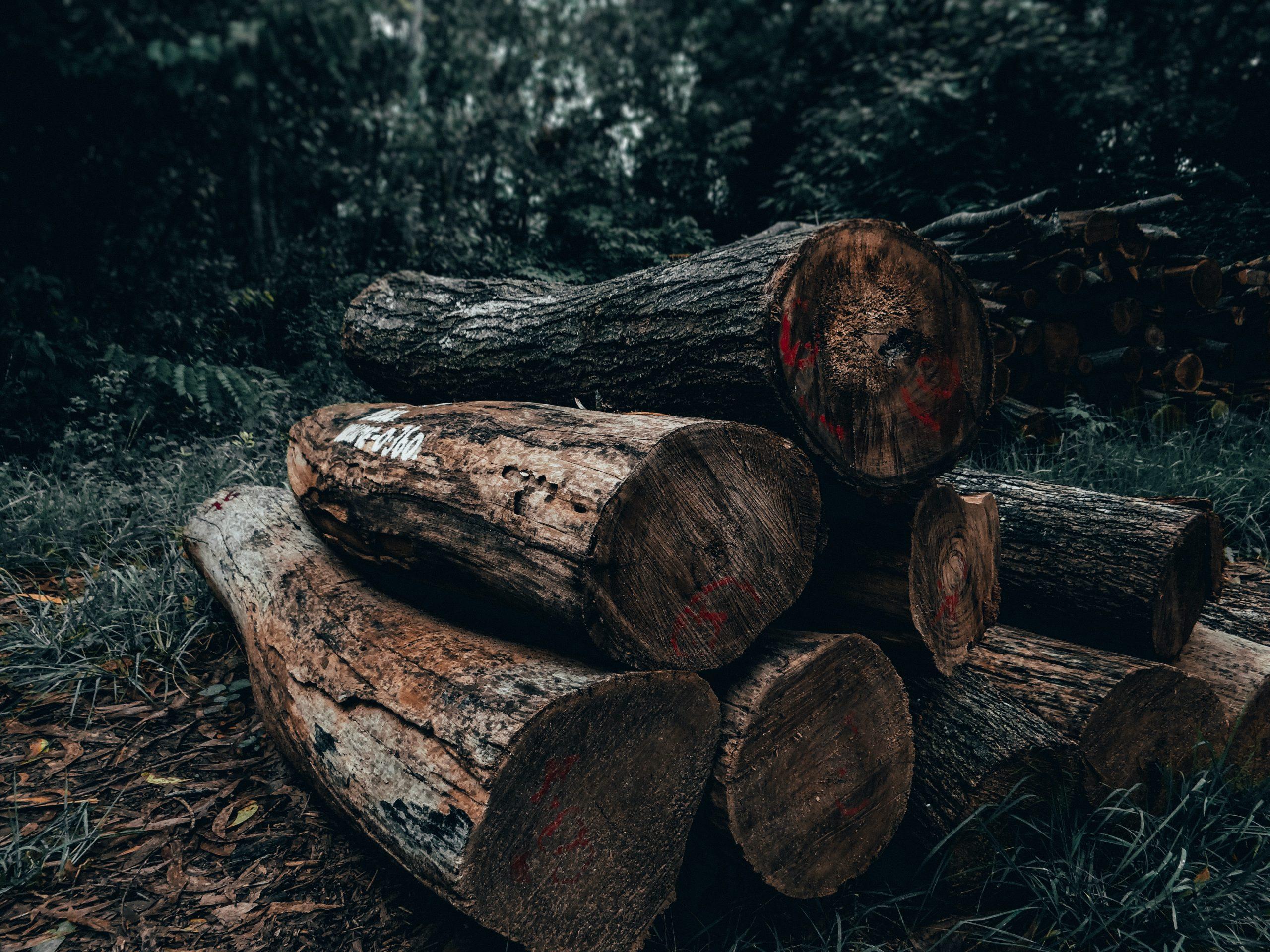 Desmatamento para além do meio ambiente