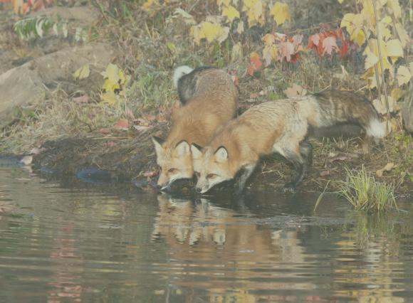 Serviços ecossistêmicos – benefícios insubstituíveis da natureza